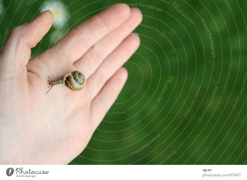 Tuchfühlung II Natur Hand Tier Finger nah Kontakt Gänseblümchen Schnecke Fühler Zwitter Schneckenhaus