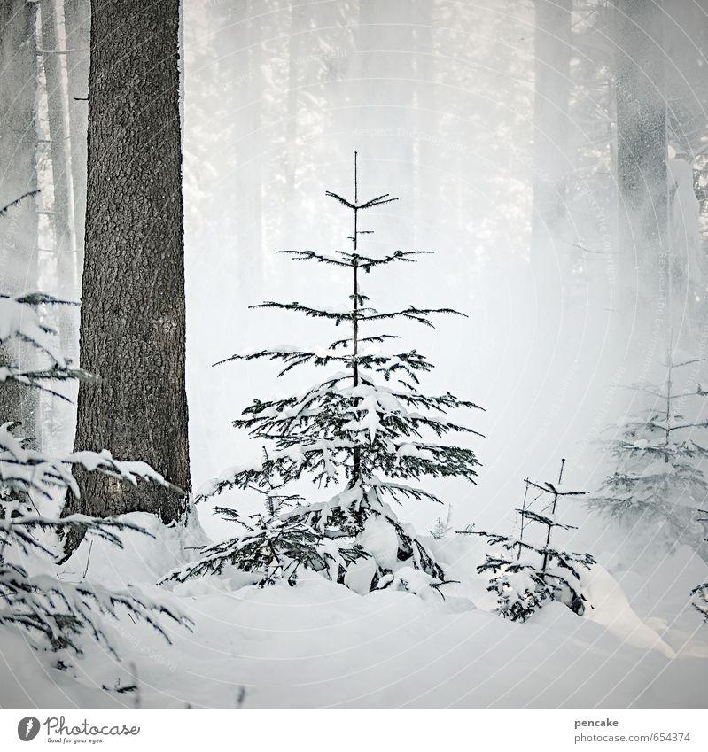 e'tännschn Natur weiß Baum Landschaft Winter Wald kalt Schnee klein Schneefall Eis ästhetisch gefährlich Hinweisschild bedrohlich Zeichen