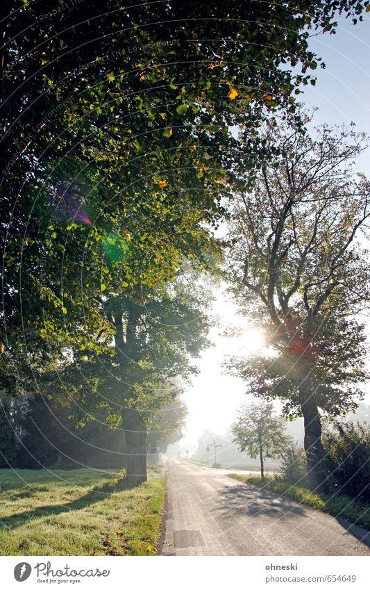 Sonnenallee Natur Landschaft Sonnenaufgang Sonnenuntergang Sonnenlicht Frühling Schönes Wetter Baum Wiese Straße Wege & Pfade Allee hell Frühlingsgefühle Glück
