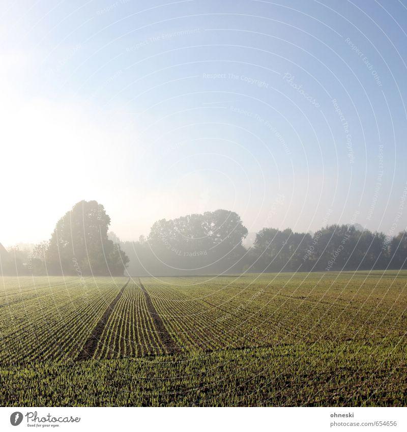 Kulturlandschaft Landwirtschaft Forstwirtschaft Natur Landschaft Urelemente Erde Sonnenaufgang Sonnenuntergang Sonnenlicht Schönes Wetter Nebel Baum Feld ruhig