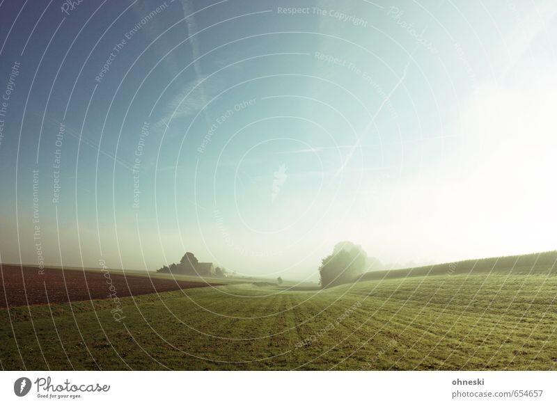 Feld und Flur Natur Sonne Erholung Landschaft Einsamkeit ruhig Ferne Frühling Gras Freiheit Stimmung Horizont träumen Nebel Erde