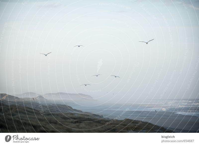 Sylt II Umwelt Natur Landschaft Himmel Küste Nordsee Meer Strand Düne Deutschland Europa Tier Vogel Möwe Schwarm fliegen blau Ferne Brandung Farbfoto