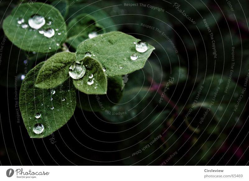 Sie sagten Trauer sei unnötig Natur Pflanze grün Wasser Blatt Traurigkeit Gefühle Herbst Stimmung Regen glänzend Wassertropfen nass Seil Verzweiflung