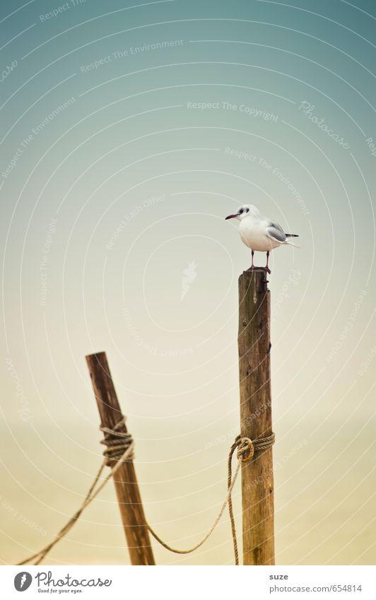 Pfahlhocker ruhig Strand Meer Umwelt Natur Tier Urelemente Luft Wasser Himmel Klima Wetter Küste Ostsee Wildtier Vogel 1 sitzen warten authentisch einfach