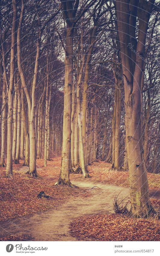 Waldweg Umwelt Natur Landschaft Pflanze Erde Herbst Baum Park Wege & Pfade Wachstum fantastisch groß hoch natürlich Idylle Ziel herbstlich Herbstbeginn
