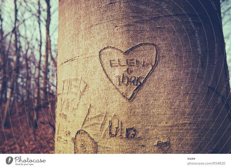 E+J=<3 Natur Baum Wald Umwelt Gefühle Liebe klein Glück natürlich braun Paar Zusammensein Freizeit & Hobby Schilder & Markierungen Wachstum Dekoration & Verzierung