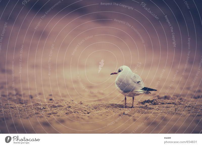 Ich bin heute ganz nah am Wodka gebaut ruhig Strand Natur Tier Sand Küste Ostsee Wildtier Vogel 1 stehen warten klein natürlich Neugier niedlich trist Gefühle
