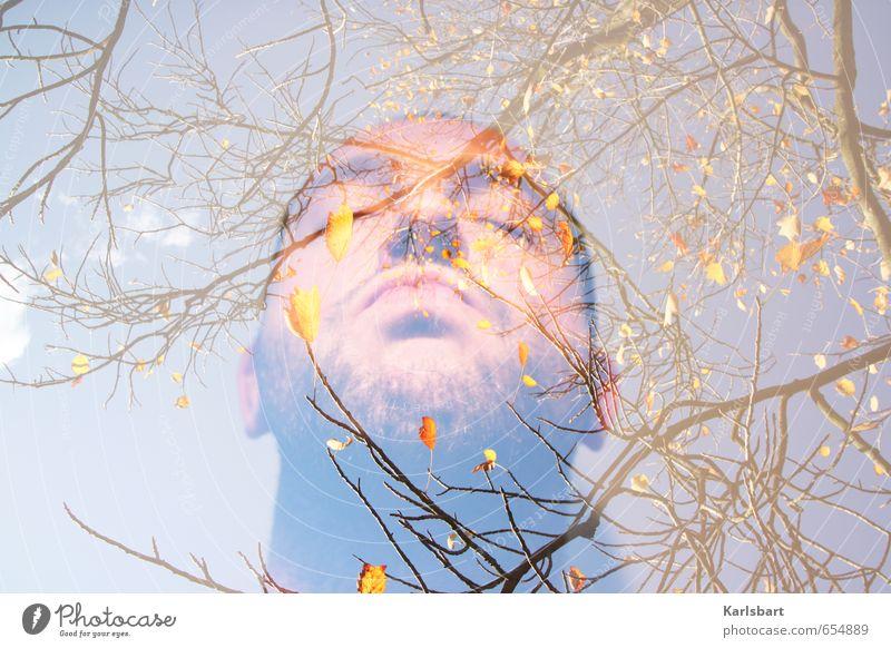 Den Herbst riechen Mensch Himmel Natur Mann Baum Erholung ruhig Blatt Gesicht Erwachsene Umwelt Leben Senior Herbst Frühling Gesundheit