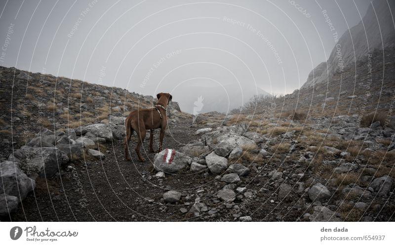 ….mmmh da lang? Hund Natur Landschaft Tier Berge u. Gebirge Herbst Gras Felsen braun Luft Nebel Wind stehen wandern Ausflug Abenteuer