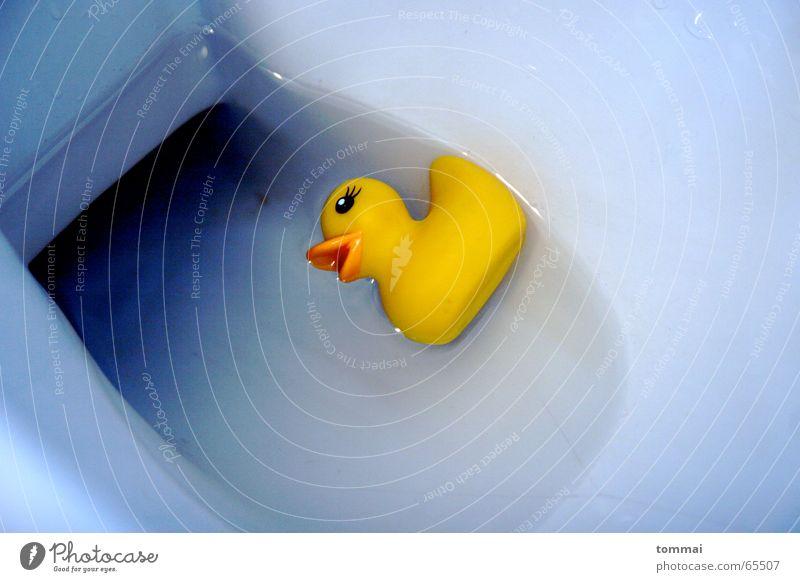 WC Ente... gelb klein Schnabel schlafen Augenbraue Toilette Wasser Tod liegen Geschirrspülen fallen Seite blau Kontrast Im Wasser treiben Schwimmen & Baden