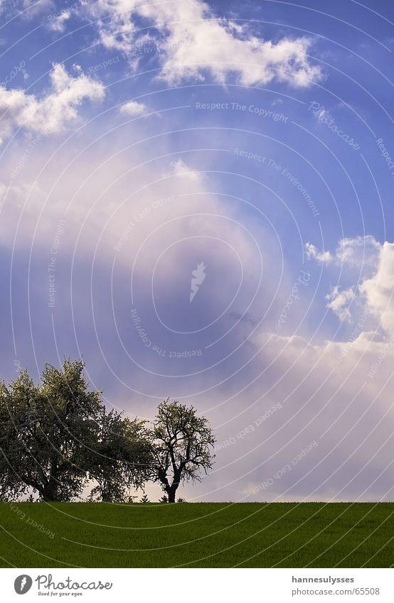 weite 01 Natur Himmel Baum blau Wolken Wiese himmelblau