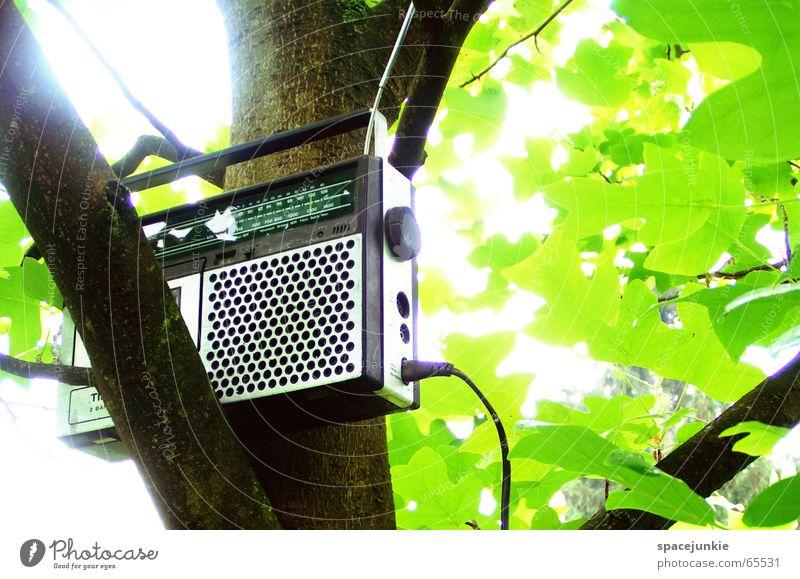 music tree Sommer Sonne schrecklich rein Musikkassette Kassettenrekorder Baum Blatt grün old-school Sender Antenne Licht Sonnenstrahlen zieh mir Radio Ast