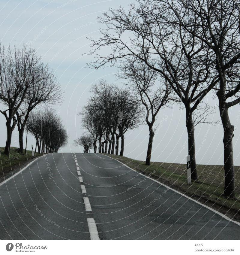 am Ende der Straße Pflanze Baum Winter kalt Wiese Herbst Wege & Pfade Gras grau Linie Regen Feld Schilder & Markierungen Geschwindigkeit fahren