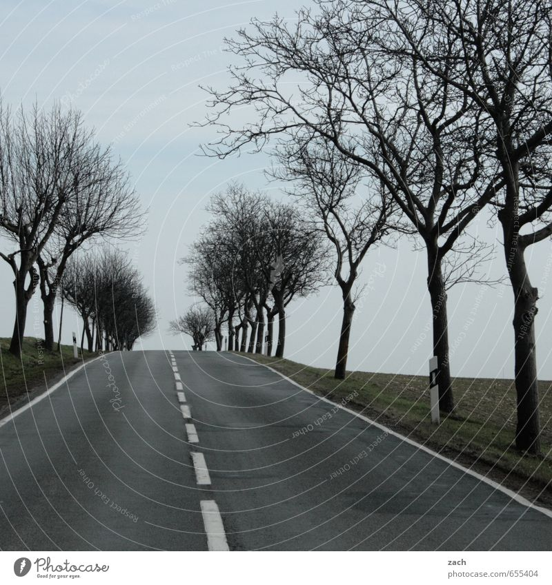 am Ende der Straße Winter Herbst schlechtes Wetter Regen Pflanze Baum Gras Wiese Feld Verkehrswege Straßenverkehr Autofahren Wege & Pfade
