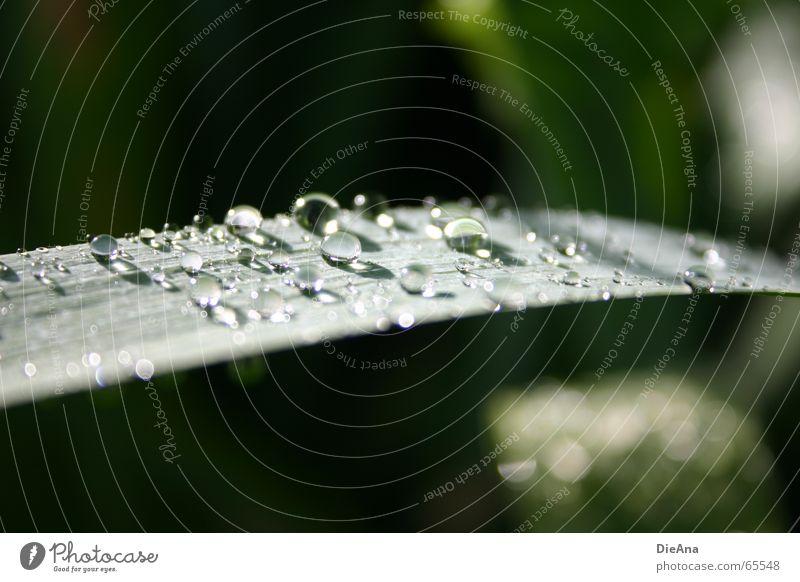 Nach dem Regen... Natur Wasser grün leaf raindrops water sunshine Farbfoto Außenaufnahme Menschenleer Tag Unschärfe