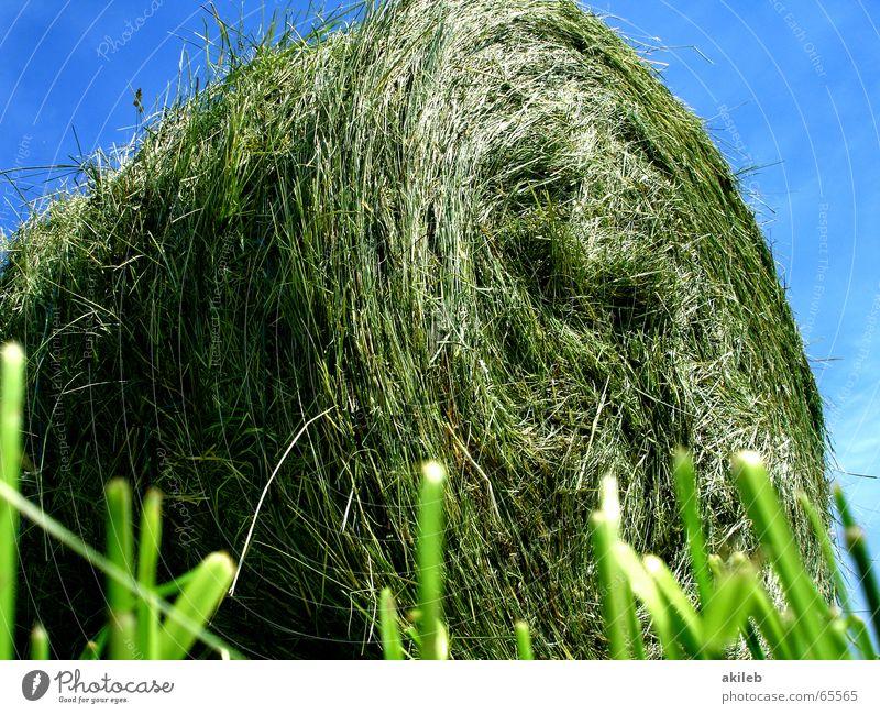 Grashüpfer-Perspektive Stroh Feld Strohballen Sommer ruhig Landwirtschaft Wiese Heuballen grün gelb Wolken rund Erholung Froschperspektive Himmel Wärme blau