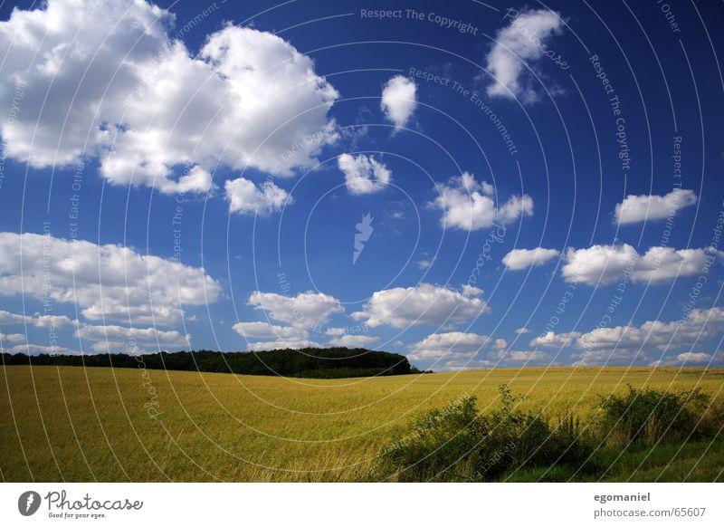 Ein Bild vom Kornfeld Natur Himmel weiß blau Sommer Wolken Wald Wiese Feld