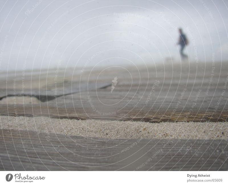 Strand Strand Holz Sand Nebel Wind unsicher Holzmehl