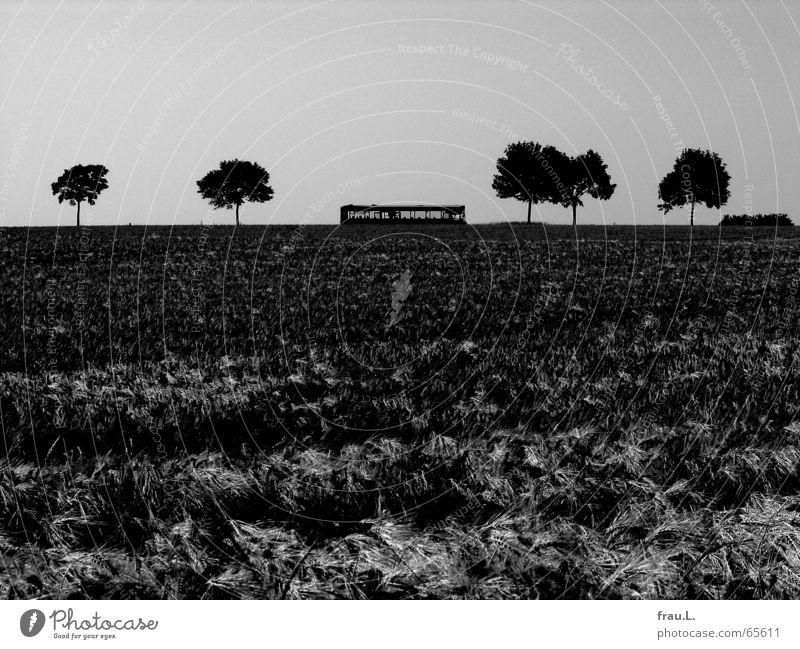Überlandbus Degersen Sommer Baum Einsamkeit Landschaft Arbeit & Erwerbstätigkeit Feld Idylle trist Verkehr Pause Dorf Bus Weizen Gerste Landstraße Niedersachsen