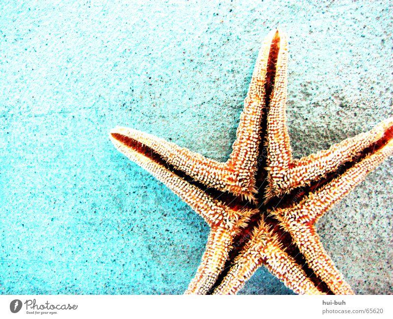 mein stern. Wasser blau Ferien & Urlaub & Reisen Meer Wand Mund Stern (Symbol) Boden 5 Fressen stachelig gepunktet Dorn Zacken Symbole & Metaphern Seestern