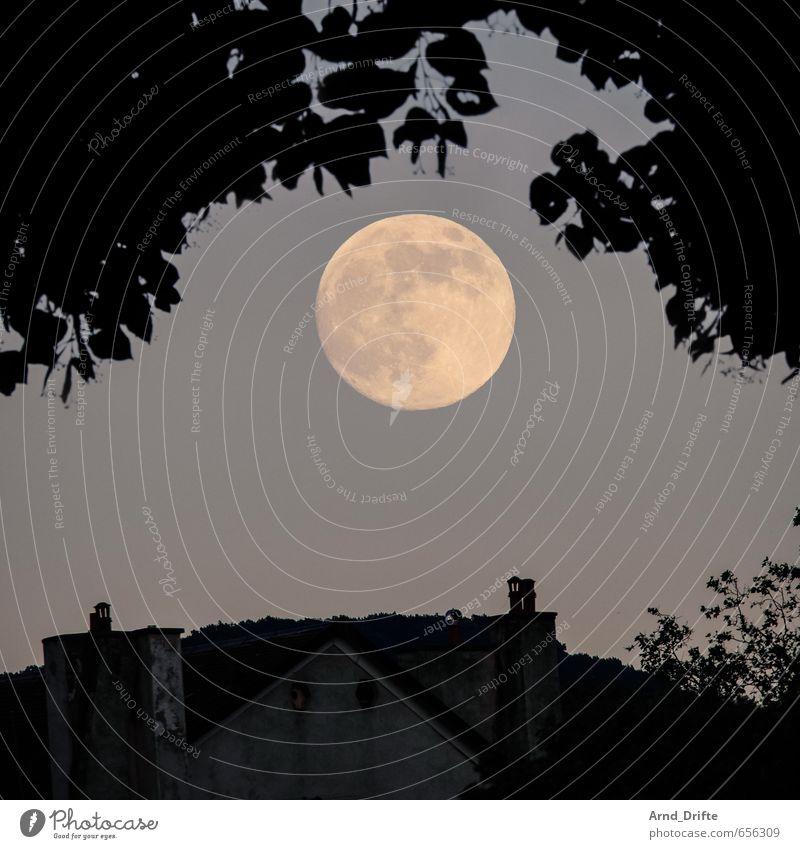 Mond Landschaft Himmel Vollmond Sommer Schönes Wetter Baum Garten Genf Stadt Stadtzentrum Haus Dach Schornstein groß Romantik Farbfoto Gedeckte Farben