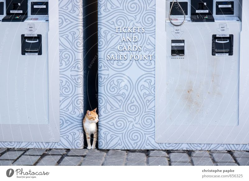 Jemand noch n Ticket? Istanbul Stadt Tier Haustier Katze 1 beobachten Blick Neugier niedlich wild ticketautomat Automat verstecken Farbfoto Außenaufnahme