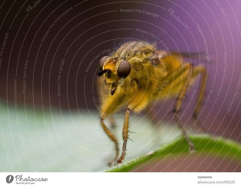 Predator gelb Schiffsbug