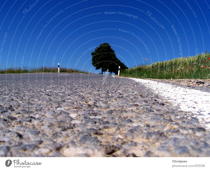 Ameisenperspektive Feld Baum Fahrbahn Streifen Schlagloch Seitenstreifen Asymmetrie Hintergrundbild Schilder & Markierungen road Straße schlgloch Makroaufnahme