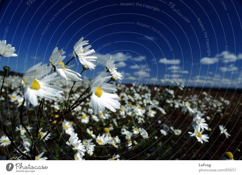 sag mir wo die blumen... Himmel Blume Wolken Bewegung Wind Sturm Halt Argentinien