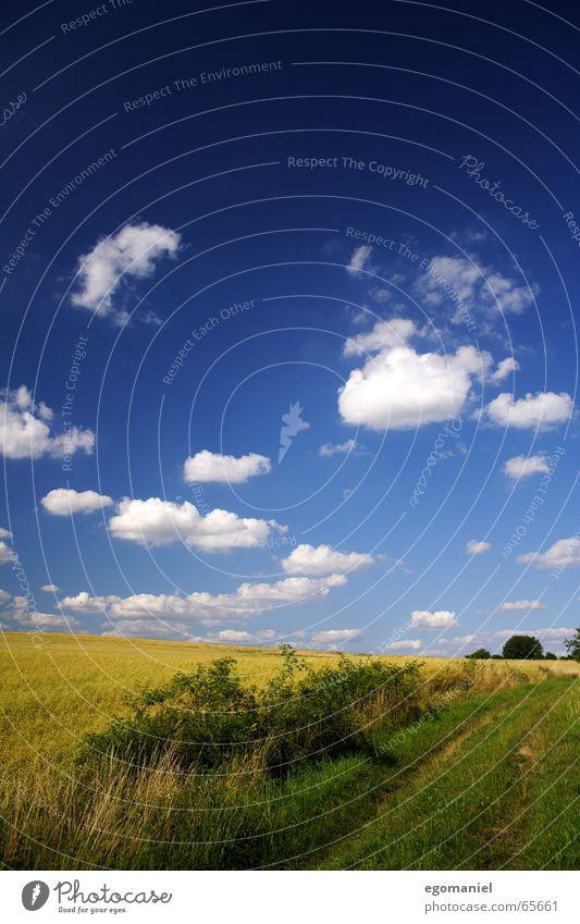 Ein Weg am Kornfeld Natur Himmel Sommer Wolken Wiese Wege & Pfade Feld Getreide