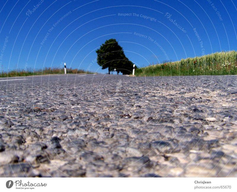 Ameisenperspektive 2 Feld Baum Fahrbahn Streifen Schlagloch Seitenstreifen Asymmetrie Hintergrundbild Schilder & Markierungen road Straße schlgloch