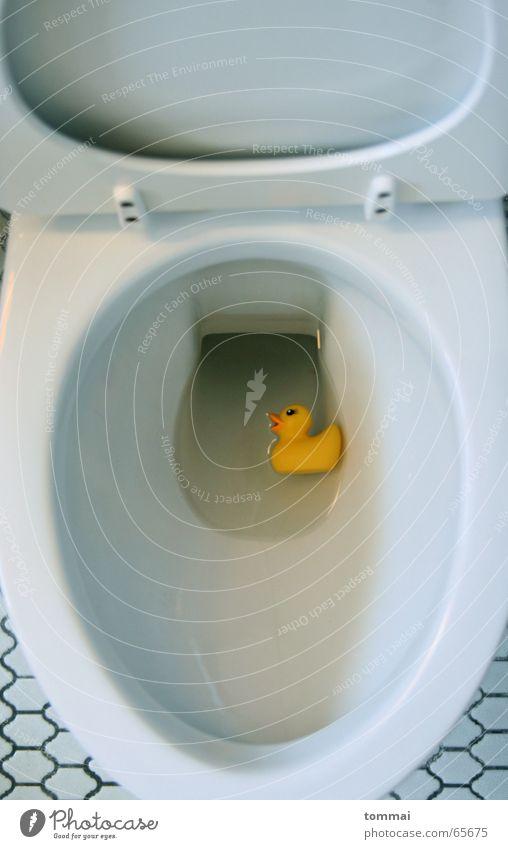 WC Ente II gelb Entenküken weiß Schnabel Augenbraue Toilette Wasser blau Im Wasser treiben Schwimmen & Baden