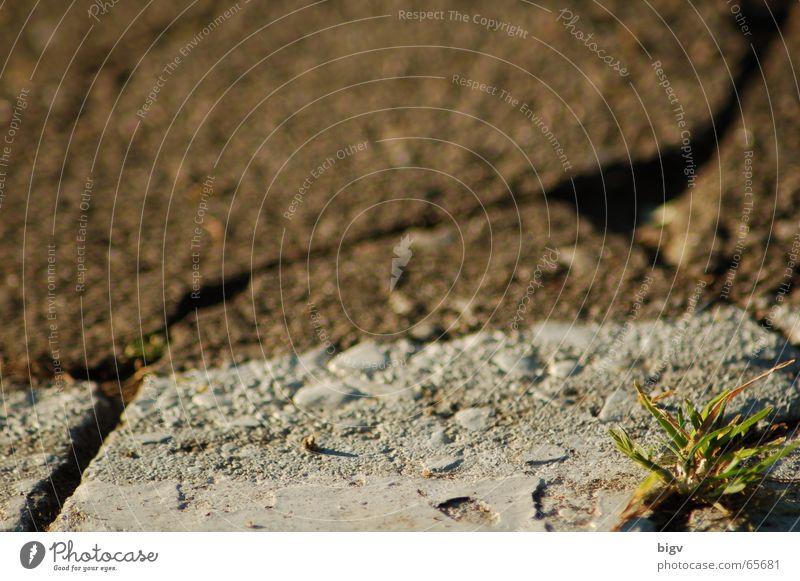 Leben im Stein #2 Pflanze Gras Schilder & Markierungen grün Parkplatz passt hier nicht hin Pflastersteine Unschärfe