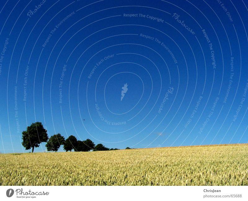 Landscape Natur schön Baum blau ruhig gelb Erholung Feld gehen Ast Freundlichkeit Reihe Baumstamm Anordnung untergehen Dreieck