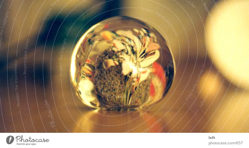 Orchideenkugel Glaskugel Physik Reflexion & Spiegelung Briefbeschwerer Dinge Wärme