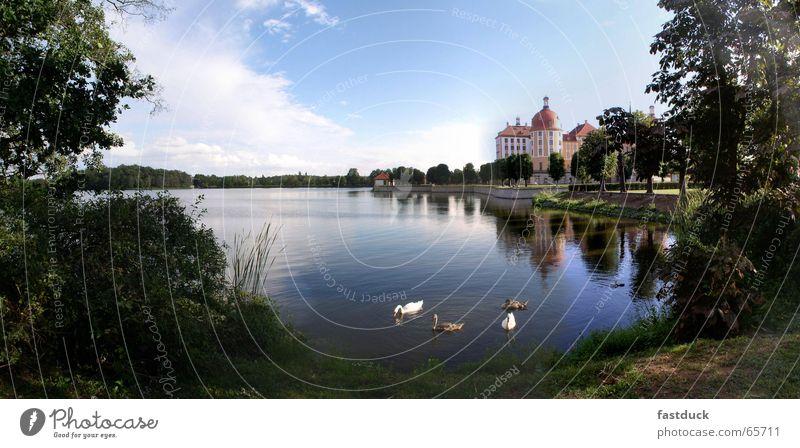 Schwäne zu Moritzburg Wasser Baum grün blau Wald Park Burg oder Schloss Schwan Sachsen Dresden Jagdschloss Moritzburg