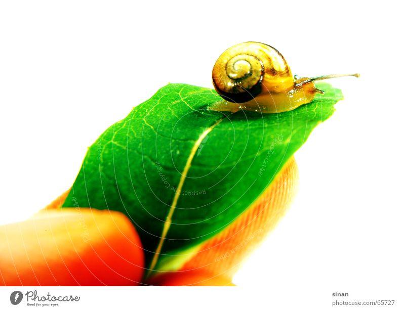 LAAAANGSAM Natur schön Baum grün Pflanze Blatt Haus Tier braun Finger süß rund Freundlichkeit Schnecke Fühler langsam