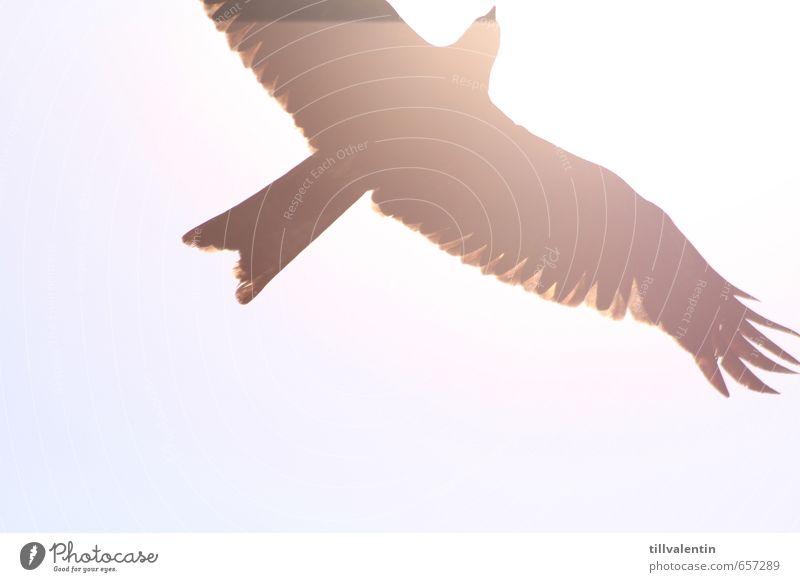 Hell erleuchtet II Tier Wildtier Vogel Greifvogel 1 heiß hell blau weiß Gedeckte Farben Außenaufnahme Detailaufnahme Experiment Menschenleer Hintergrund neutral
