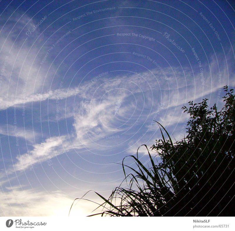 Fernweh Himmel Wolken Ferne Gras nah