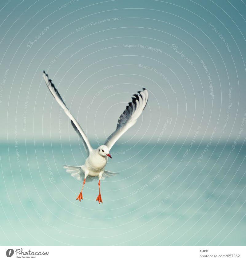 Luftnummer Freiheit Meer Umwelt Natur Tier Urelemente Wasser Himmel Horizont Klima Wetter Ostsee Wildtier Vogel Flügel 1 fliegen authentisch fantastisch