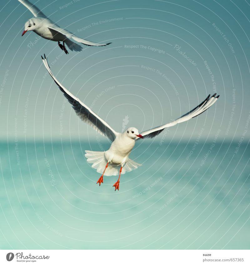 Mit Leichtigkeit schön Freiheit Meer Umwelt Natur Tier Urelemente Wasser Himmel Horizont Klima Wetter Ostsee Wildtier Vogel Flügel 2 fliegen authentisch