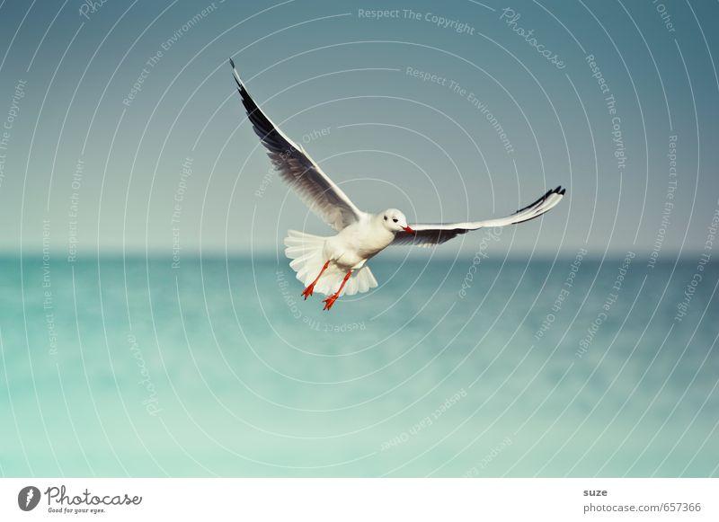 Emma macht die Mücke Meer Umwelt Natur Tier Urelemente Wasser Himmel Horizont Klima Wetter Ostsee Wildtier Vogel Flügel 1 fliegen authentisch einfach