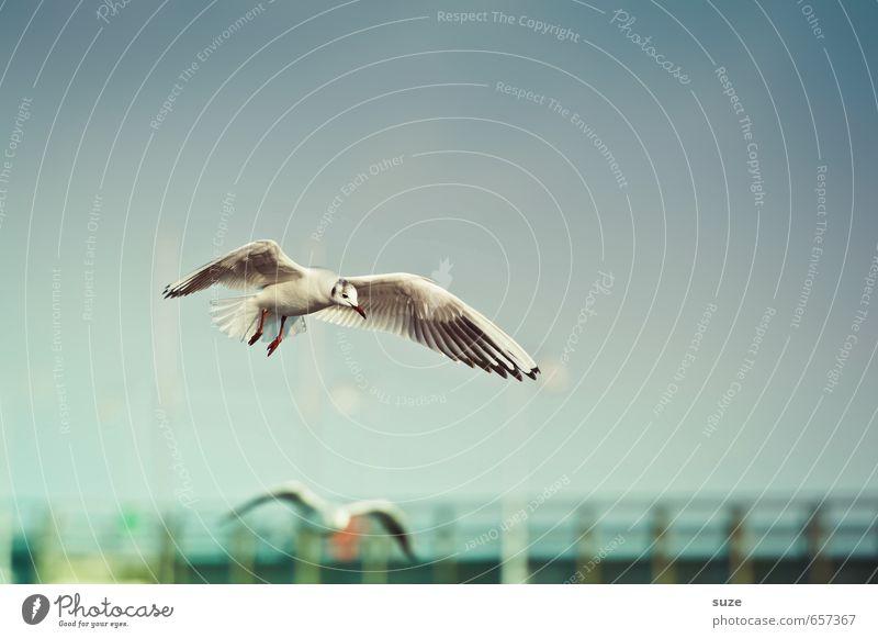 In luftiger Höhe Freiheit Sommerurlaub Meer Umwelt Natur Tier Luft Himmel Horizont Wetter Küste Ostsee Wildtier Vogel Flügel fliegen authentisch fantastisch