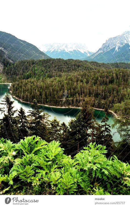 Zugspitzblick weiß grün Wald Schnee Berge u. Gebirge grau Felsen Tal Gebirgssee Zugspitze