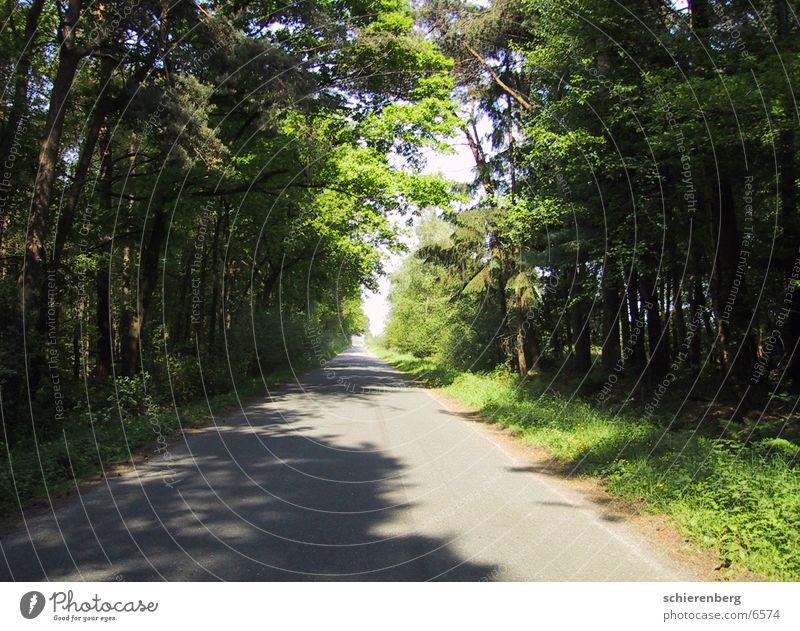 Greenstreet Baum grün Straße Wege & Pfade