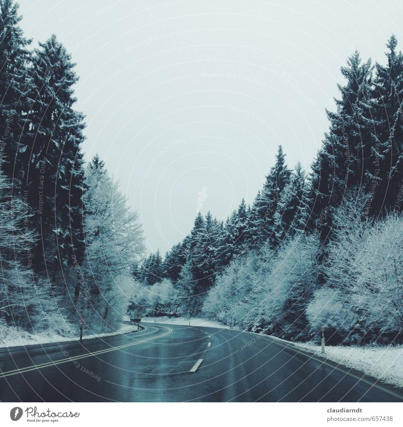 Winterwald Umwelt Natur Himmel Eis Frost Schnee Baum Tanne Nadelwald Wald Schwarzwald Straße Ferien & Urlaub & Reisen kalt nass blau grau weiß Bewegung