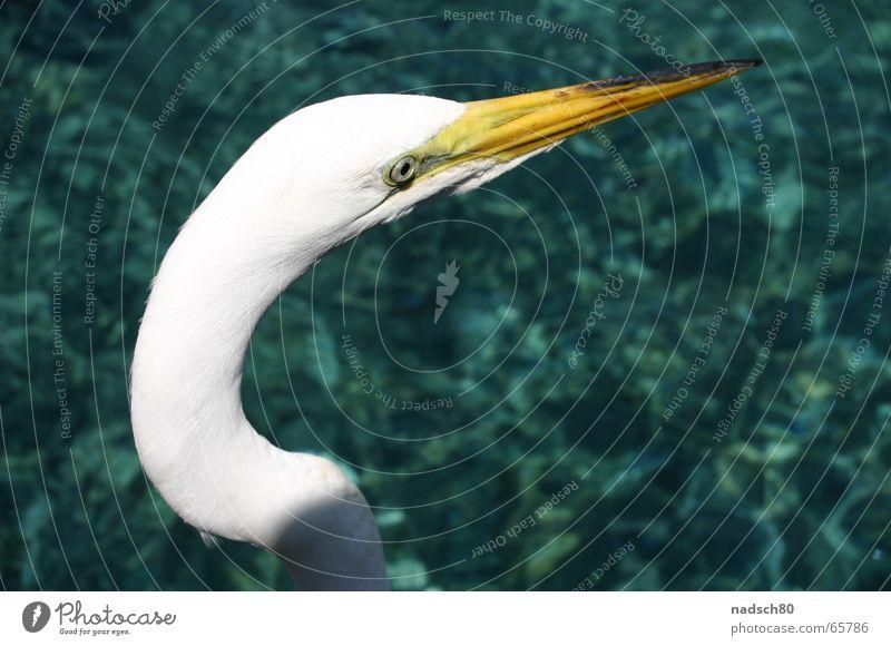 Vogel Wasser weiß Meer Einsamkeit Vogel nah Klarheit Zoo Schnabel Bogen