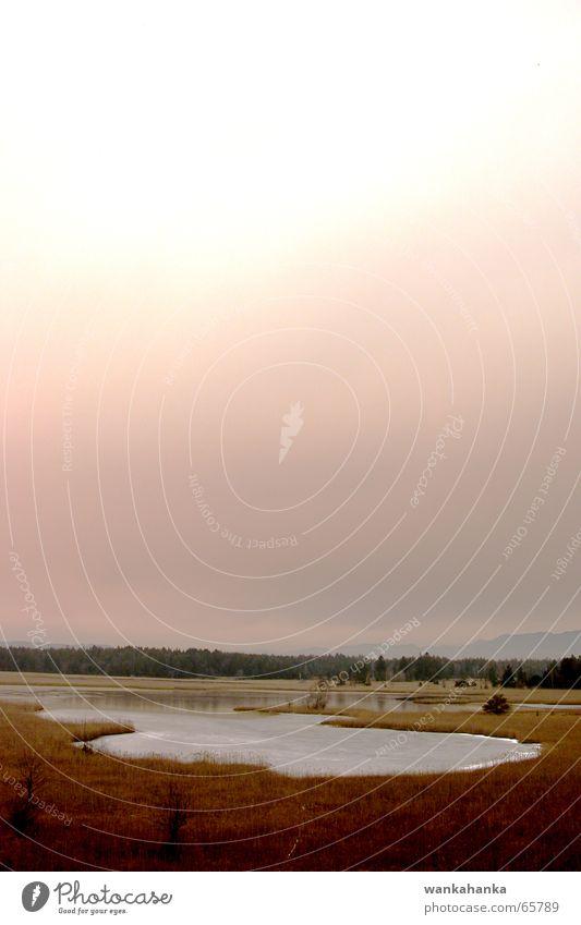 roter Sturm 2 rosa Heide Moor See Teich harmonisch ungewiss Himmel Landschaft Farbe Gefühle