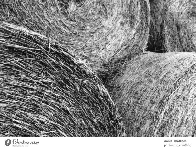 gebalte ladung Stroh Gras Schwarzweißfoto