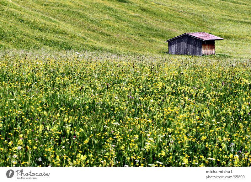 Sommer-Wiesen-Hütte grün ruhig Einsamkeit gelb Wiese Holz Bayern Hütte Berghang Allgäu